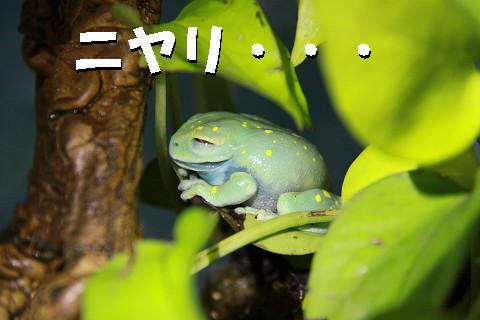 カエル笑う.jpg